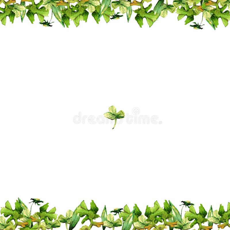 Frame of watercolor green grass and flowers of petals and blades of clover isolated on white background drawing. Frame of watercolor grass and flowers of petals royalty free illustration