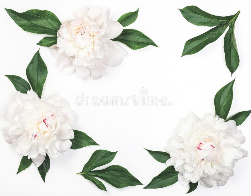 Frame of white peony flowers and leaves isolated on white background. Flat lay. Frame of white peony flowers and leaves isolated on white background. Top view stock image