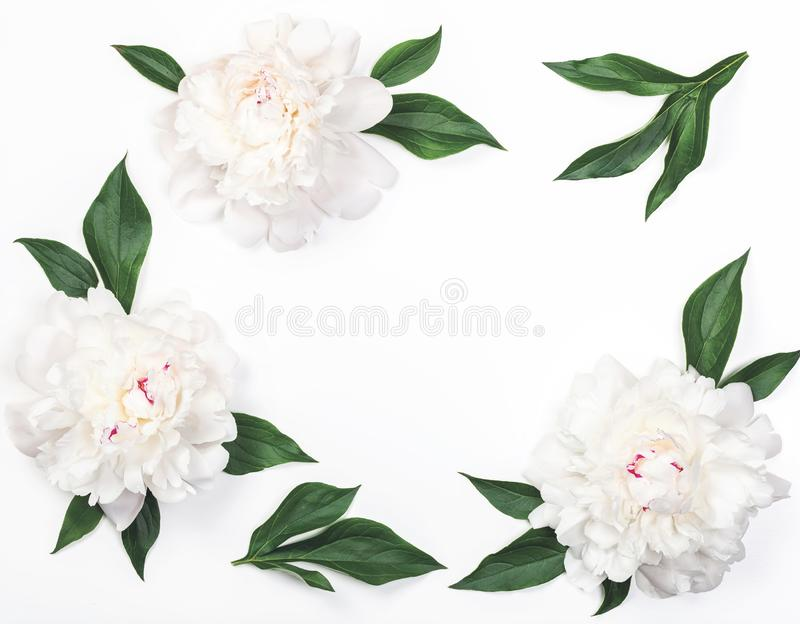 Frame of white peony flowers and leaves isolated on white background. Flat lay. Frame of white peony flowers and leaves isolated on white background. Top view royalty free stock photography