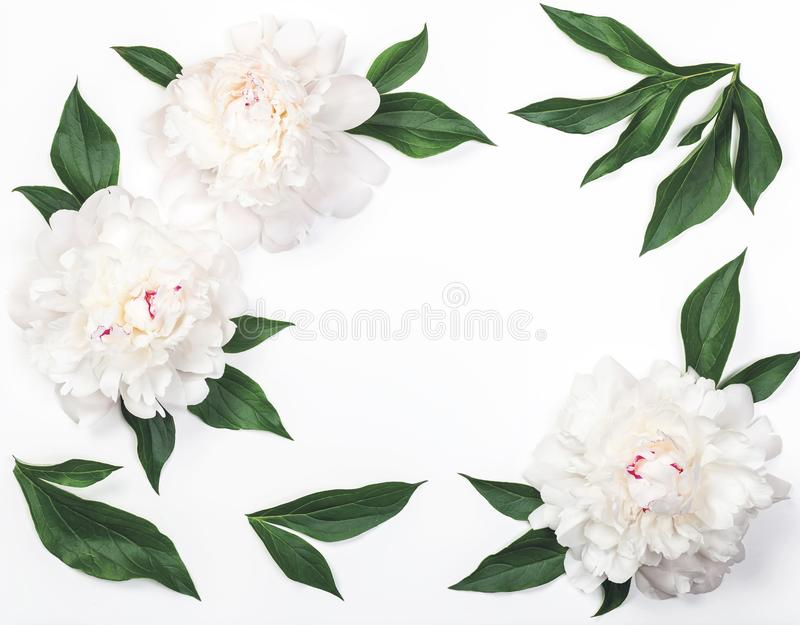 Frame of white peony flowers and leaves isolated on white background. Flat lay. Frame of white peony flowers and leaves isolated on white background. Top view stock photos