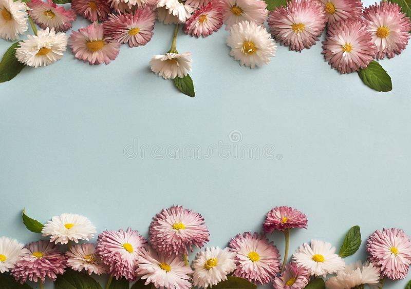 Frame of white and pink daisies stock image