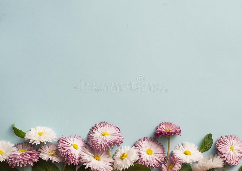 Frame of white and pink daisies royalty free stock photography