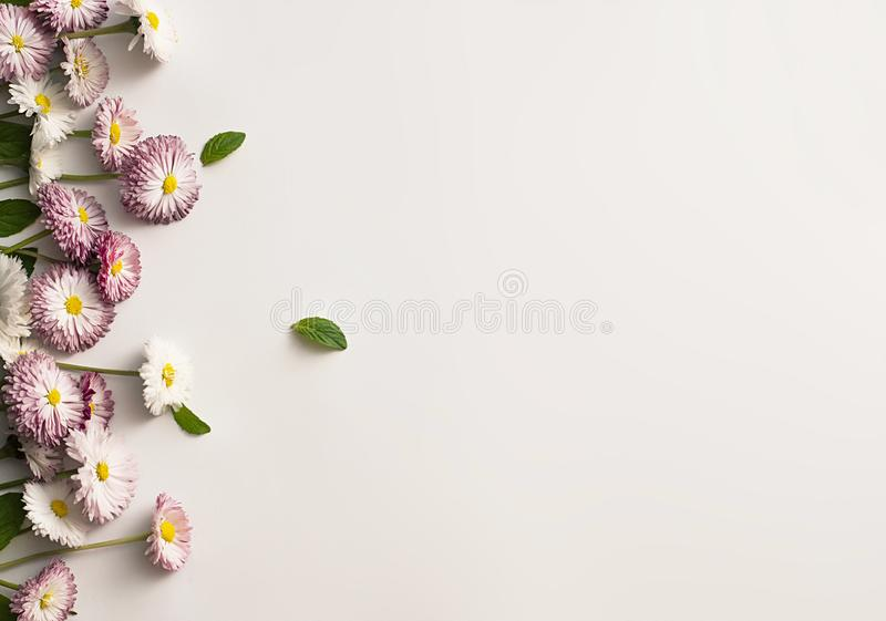 Frame of white and pink daisies royalty free stock image