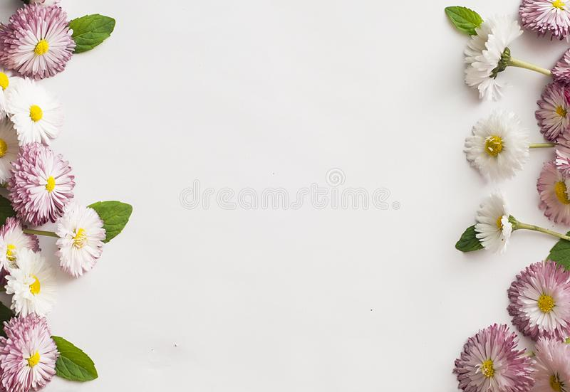 Frame of white and pink daisies stock photo