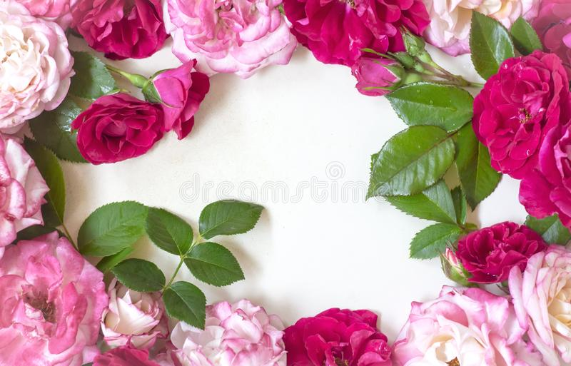 Frame wreath pattern with roses, pink flower bud, branches and leaves on white background. flat lay, topview copy space royalty free stock photography