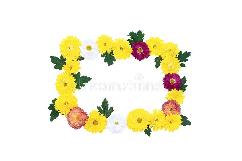 Frame of yellow flowers isolated on white background stock image