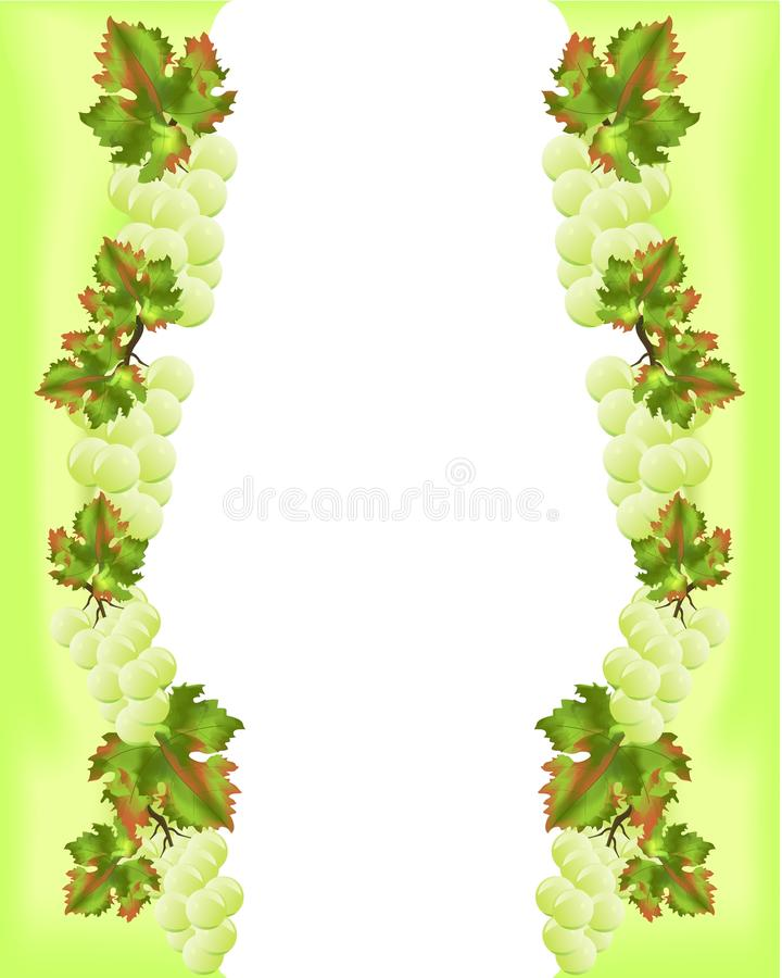 Frame with yellow grapes, cdr vector royalty free stock image
