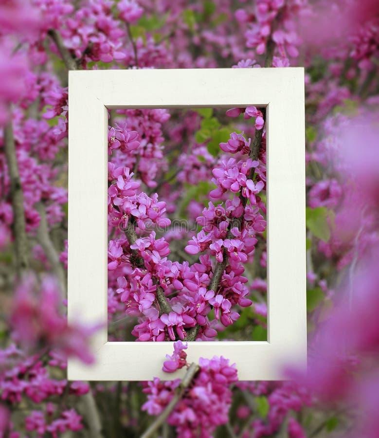 frame2 стоковая фотография