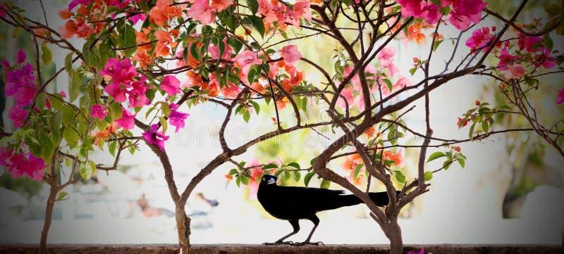 Framed bird stock photo