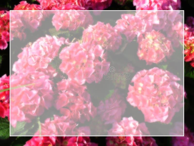 Framed floral background stock image