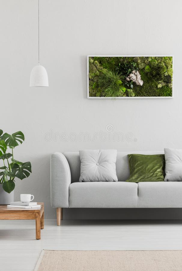 Framed, green moss garden on a white wall in a trendy living room interior with an elegant, gray sofa and a wooden table. Real pho. To stock photo
