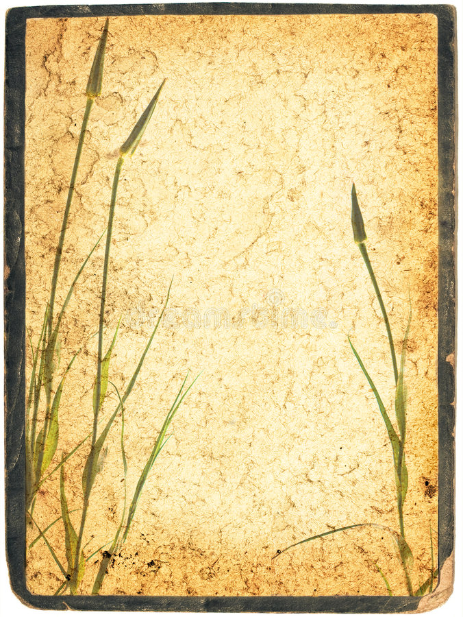 Download Framed Herbal Collage Stock Images - Image: 3085104