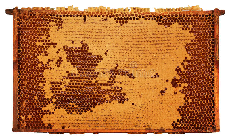Framed Honeycomb. With partly covered cells, isolated on white stock images