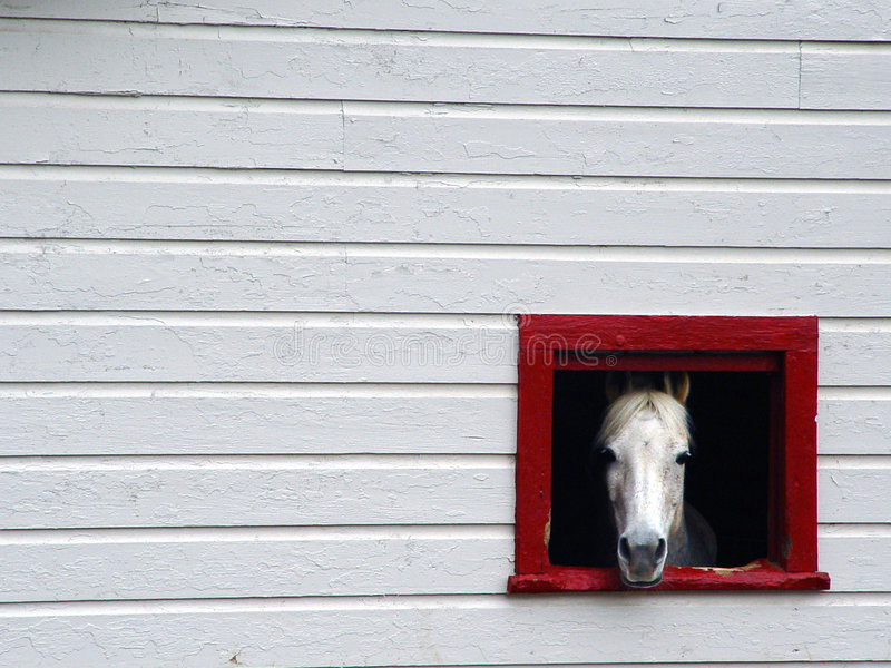 Download Framed Horse stock image. Image of horse, look, barn, stall - 50263