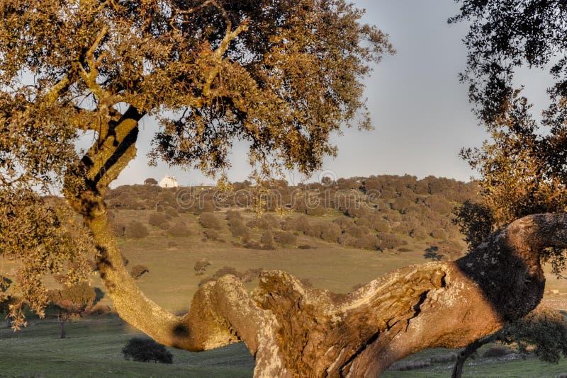 Framed rural landscape of Castro, Verde, in the Alentejo, Portugal royalty free stock photography
