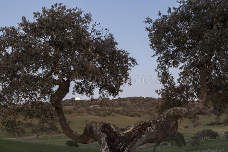 Framed rural landscape of Castro, Verde, in the Alentejo, Portugal royalty free stock photos