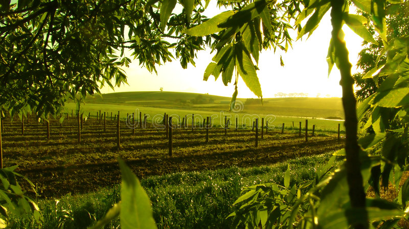 Framed Vineyard royalty free stock photography