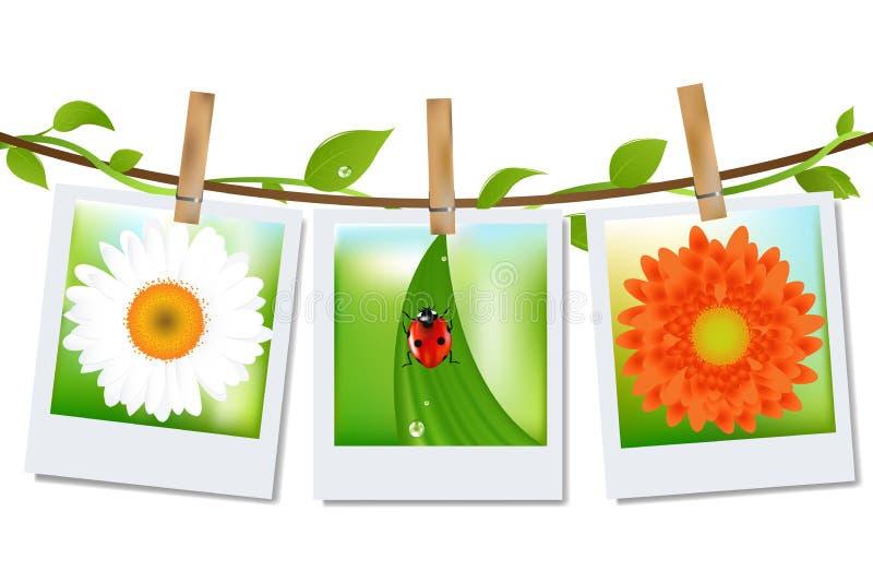 Frames da foto com imagem da natureza ilustração royalty free