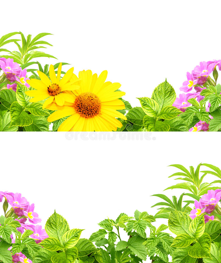 Frames with summer flowers royalty free stock image
