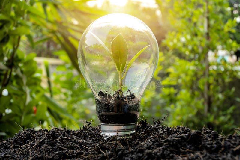 Framgångbegrepp, trädet som växer i den ljusa kulan fotografering för bildbyråer