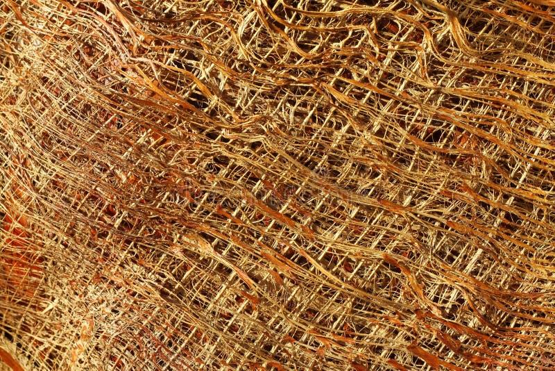 Frammento della corteccia della palma fotografia stock libera da diritti