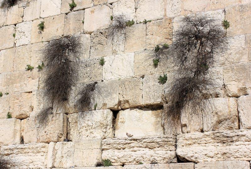 Frammento della parete lamentantesi a Gerusalemme immagine stock