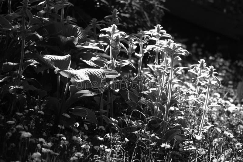 Frammento di un giardino modesto fotografia stock
