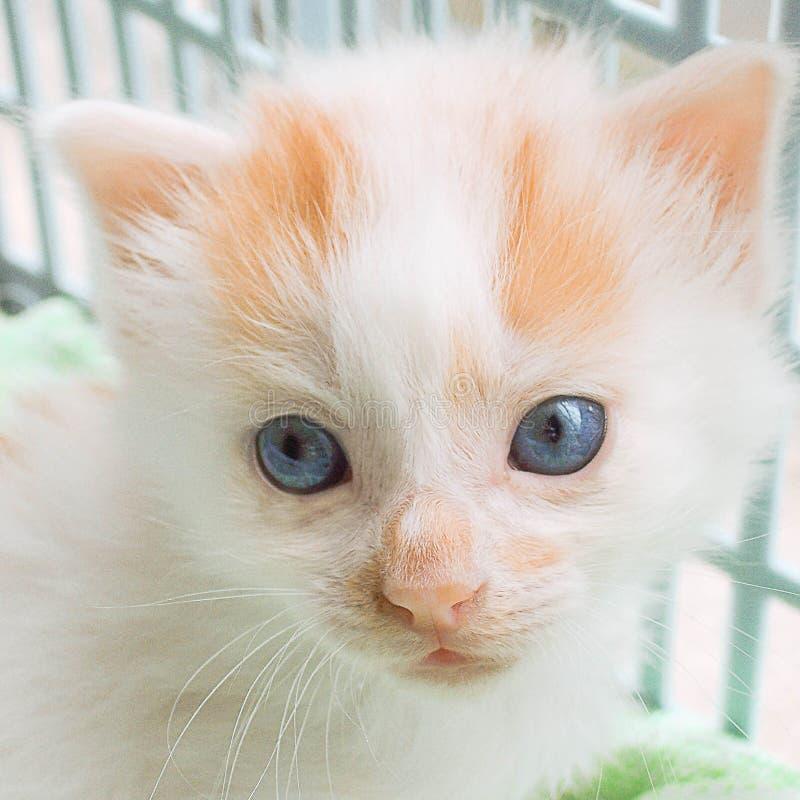Framsida av en härlig kattvalp royaltyfria foton