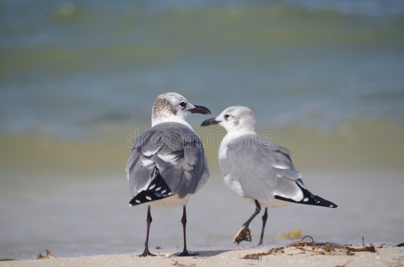 Framsida - till - framsida: två fåglar arkivfoto