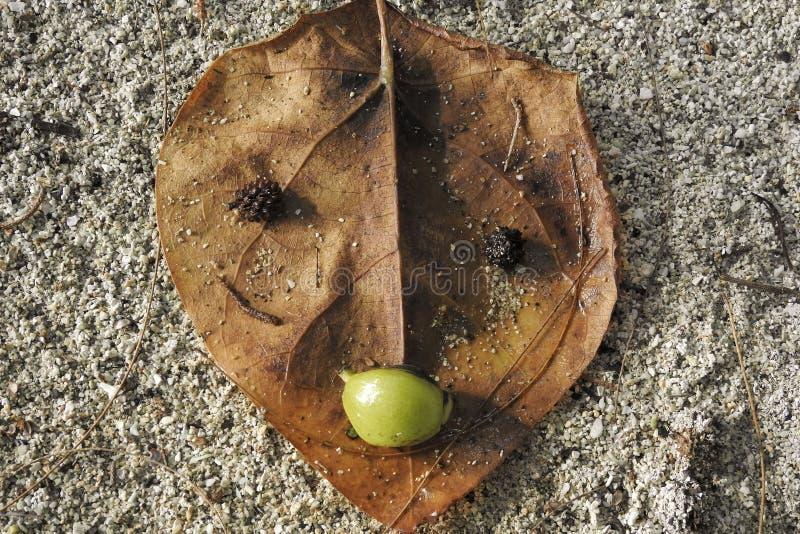Framsidan gjorde från ett dött blad och frö arkivbilder