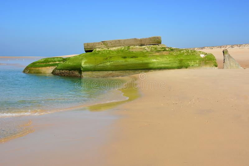 France, Atlantic Wall, gobbled blockhaus. In France in the department of Gironde this bunker, vestige of the Atlantic Wall, buries itself under the effect of stock photo