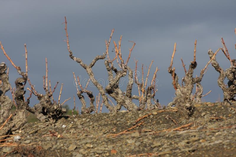 Download France winograd zdjęcie stock. Obraz złożonej z roślina - 13339764