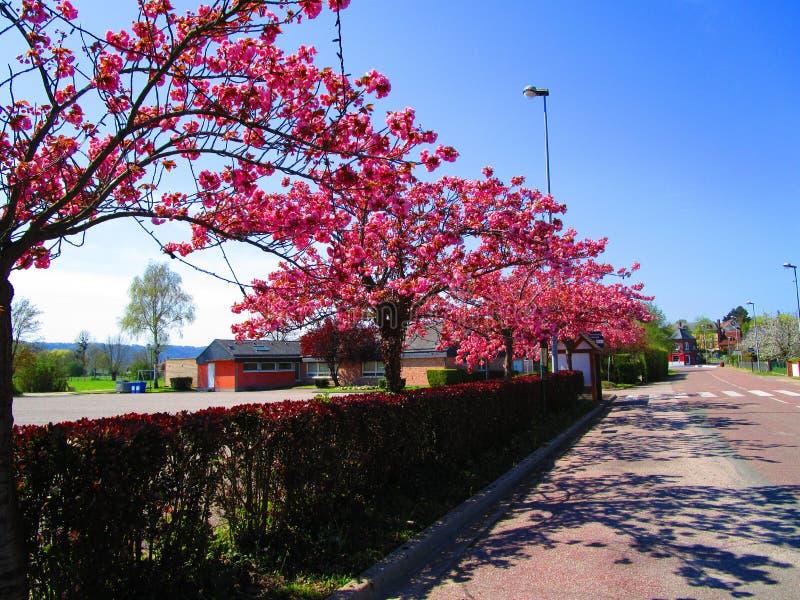 france wiosna zdjęcia stock