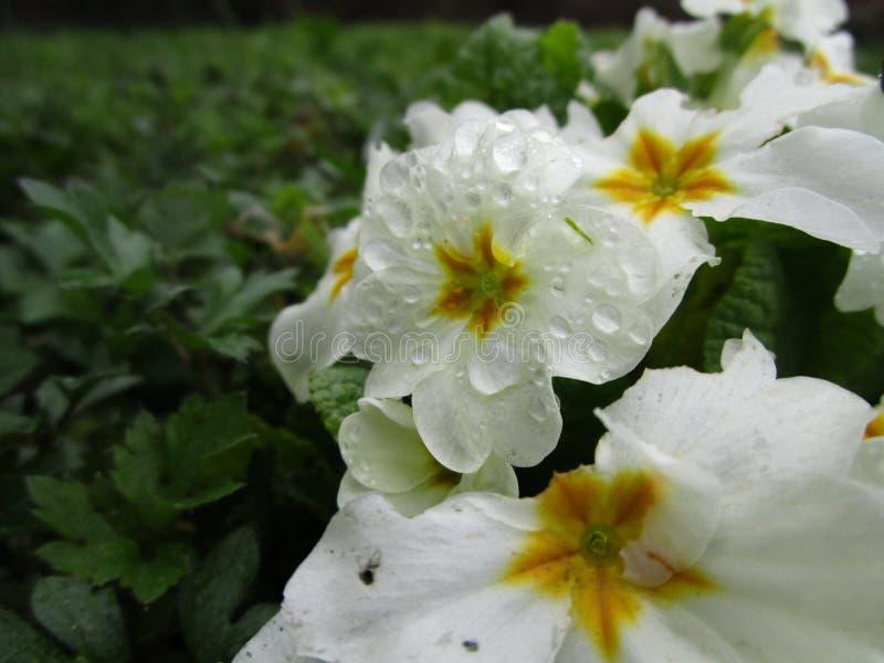 france wiosna obraz stock