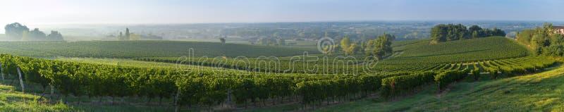 Frances de Bordeaux de coucher du soleil de vignoble photo libre de droits