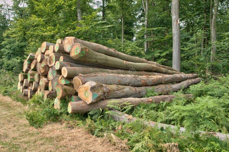 Frances, forêt de La Foret de Lyon, dans Normandie photo libre de droits