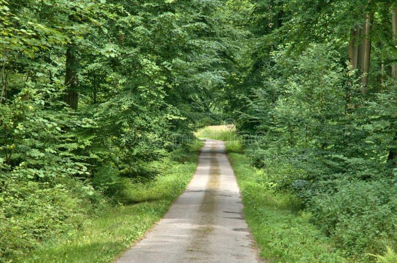 Frances, forêt de La Foret de Lyon dans Normandie image libre de droits