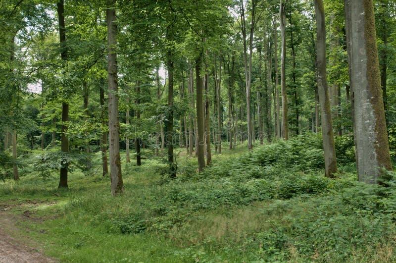 Frances, forêt de La Foret de Lyon, dans Normandie image libre de droits