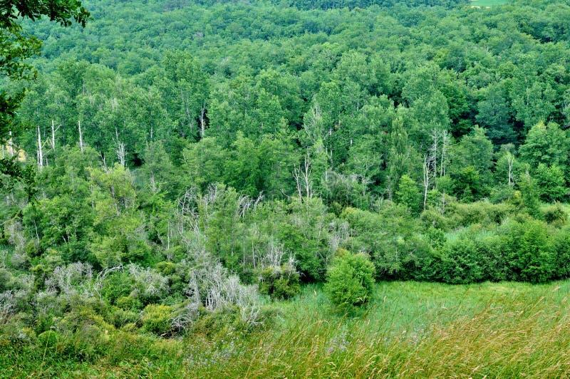 Frances, forêt pittoresque de Marquay dans Dordogne photographie stock