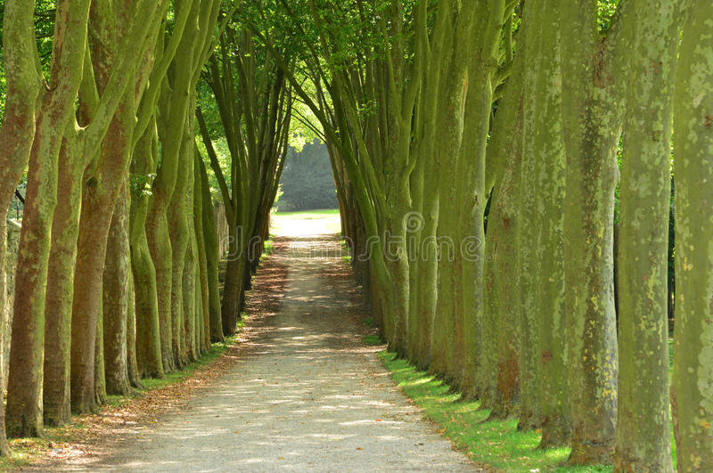 Francia, el parque clásico de Marly le Roi fotografía de archivo libre de regalías