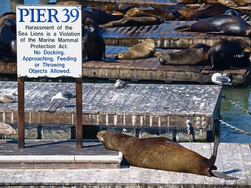 francisco pier39 san royaltyfria bilder