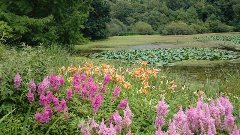 Francja Brest piękny ogród botaniczny zdjęcia royalty free