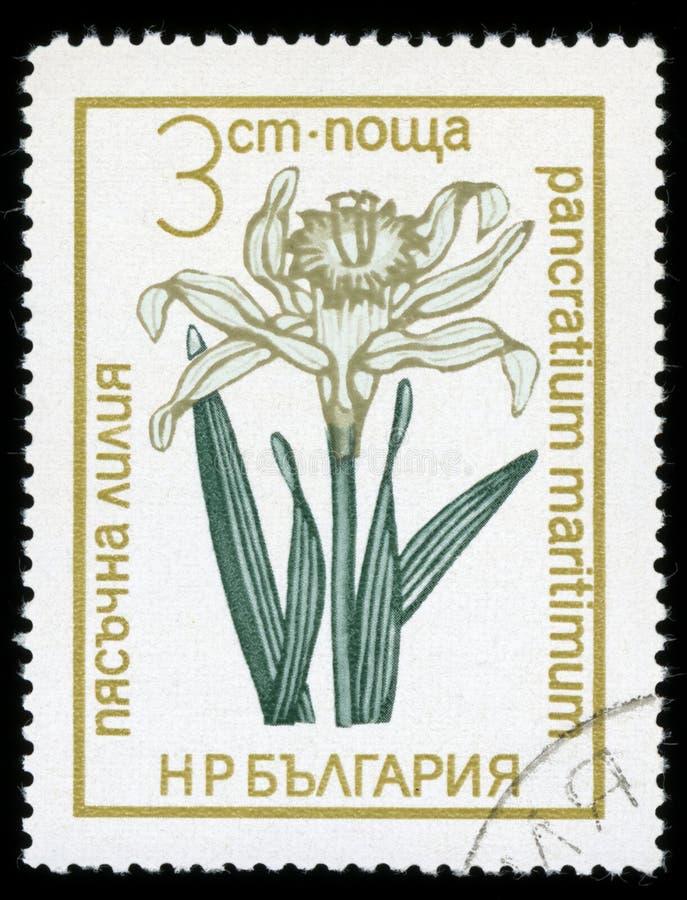 Francobollo protetto di serie del ` dei fiori del ` della Bulgaria, 1972 fotografia stock libera da diritti