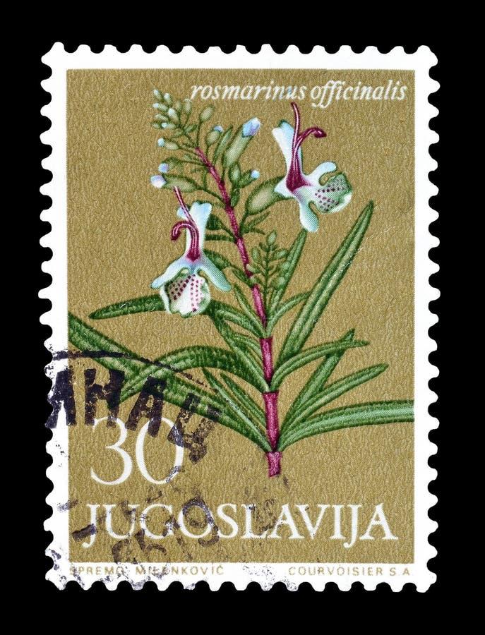 Francobollo stampato dalla Iugoslavia immagini stock libere da diritti