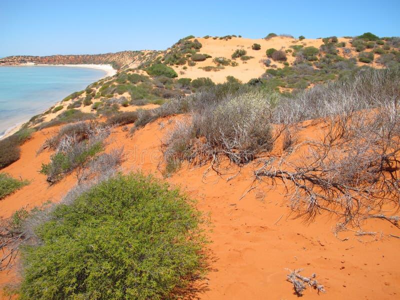 Francois Peron National Park, baía do tubarão, Austrália Ocidental fotografia de stock royalty free