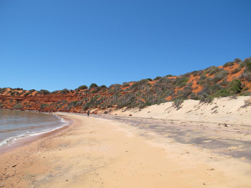 Francois Peron National Park, bahía del tiburón, Australia occidental fotos de archivo