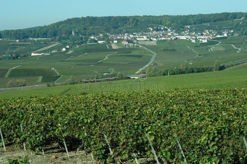 francuscy winnice obrazy stock