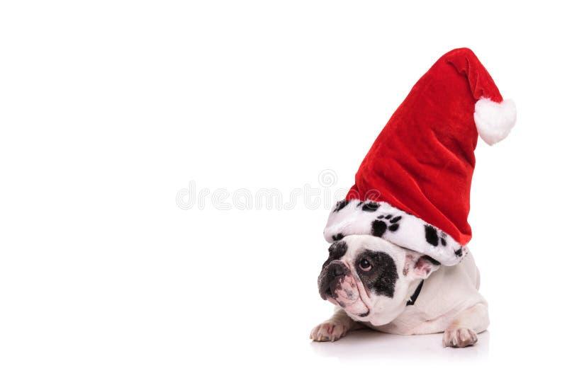 Francuski buldog jest ubranym Santa Claus kapeluszu spojrzenia popierać kogoś zdjęcie stock