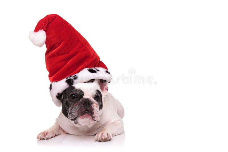 Francuski szczeniak jest ubranym dużego Santa Claus kapelusz obrazy royalty free