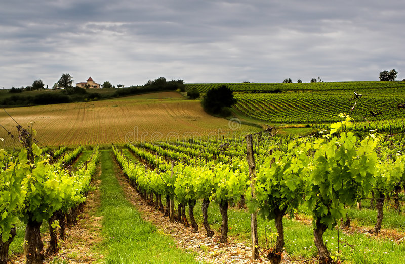 francuskie wino obraz royalty free
